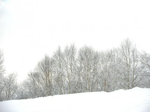 スノーボード グラトリDVD