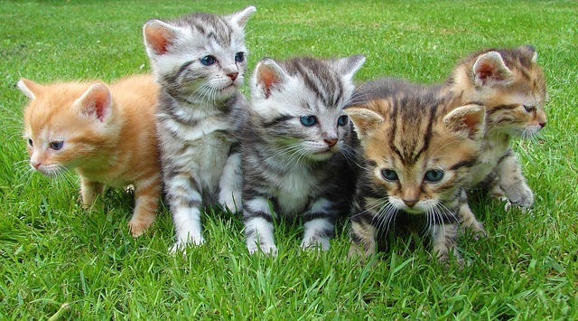 【王様のブランチにふてニャン登場】最新猫ポーズ&スマホで撮影&仲良くなる方法
