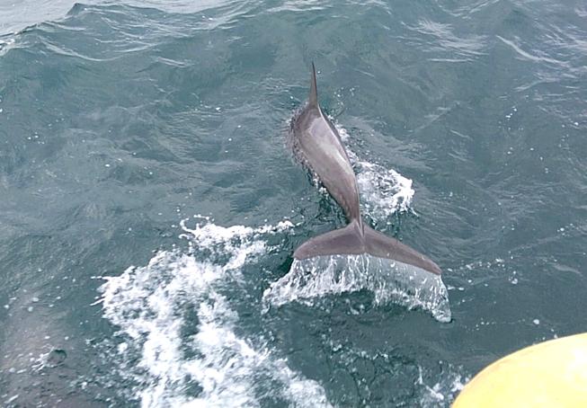 イルカウォッチング 近くで見れる