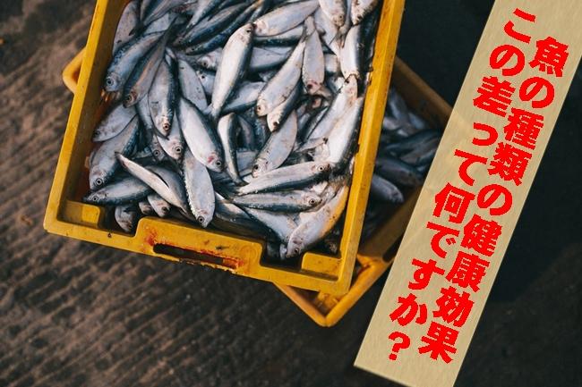 この差って何ですか? 魚の種類によっての健康効果