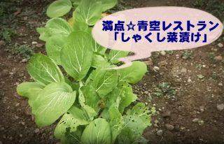 【満点☆青空レストラン しゃくし菜漬け】「うまーい」お漬物のお取り寄せは?
